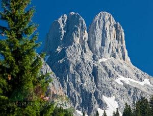 Österreich, Salzburg, Salzburger Land, Salzkammergut, Bischofsmütze, Bäume, Fichten